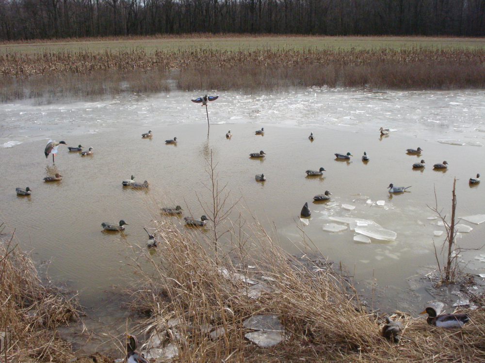 Kentucky Afield Outdoors: Squeezing Out The Last Waterfowl